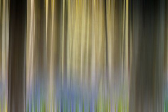 Hallerbos Abstract van Menno Schaefer