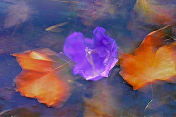 Herfst  bloem en bladeren van Marianna Pobedimova