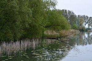Oever met omgevallen boom in het water van FotoGraaG Hanneke