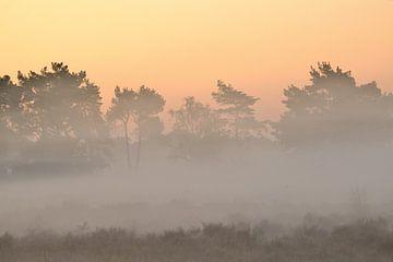 Buurserzand zonsopkomst van Petra De Jonge