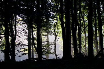 Licht der Bäume morgens von rene marcel originals