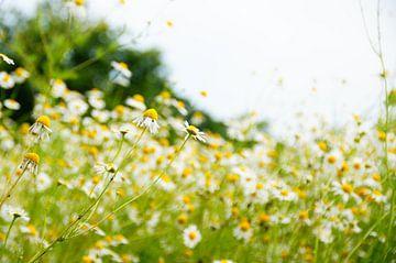 Wilde bloemen van Marlies van den Hurk Bakker
