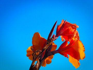 Bloem tegen de blauwe lucht van Jasper H