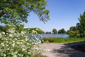 Schöne, holländische Landschaft im Frühling