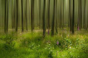 Art of nature. van Piet Haaksma
