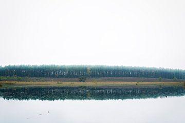 Wald von Dennis Robroek