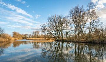 Nackte Bäume, die sich im Wasser spiegeln. von Ruud Morijn