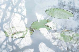 Water Lilies von