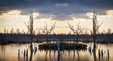 Magische Landschaft Feuchtgebiet Naturschutzgebiet Sonnenuntergang von Ger Beekes