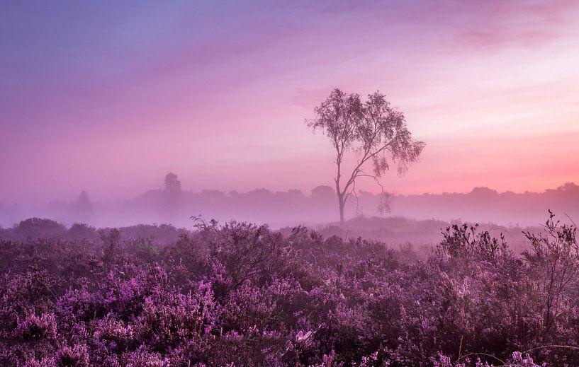 Kalmthoutse Heide  van Tom Opdebeeck