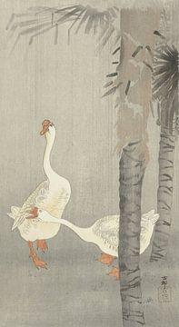 Zahme Gänse im Regen von Ohara Koson
