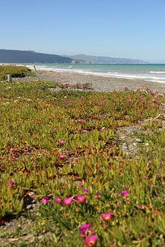 Leithfield Beach / Nieuw - Zeeland van Shot it fotografie