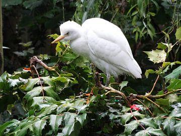 mooie witte vogel van Brigitte Koster