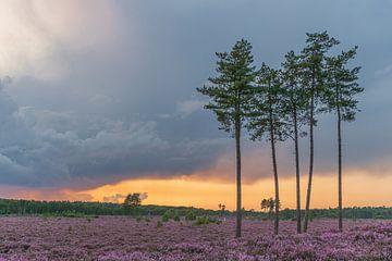 Der Treek am Abend rot von Karin Riethoven