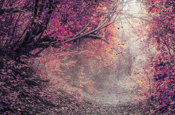 Het rode woud