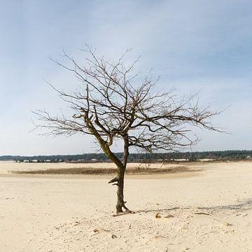 Eenzame boom von Paul Oosterlaak