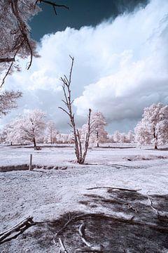 infrarood landschap met indrukwekkende lucht van Gea Veenstra