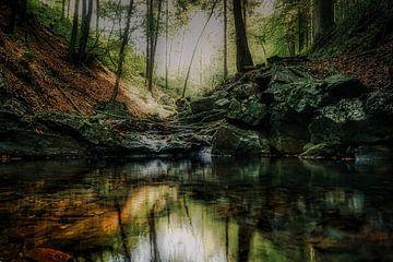 Reflectie in het bos van Rik Verslype