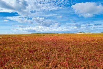 Sumpf-Samphire in Herbstfarben von Jan Huneman