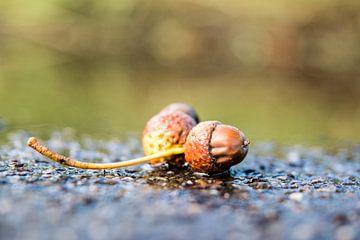 Begin van de herfst..... van Marjo Kusters