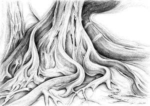 Ficus Macrophylla V von Adriana Mueller