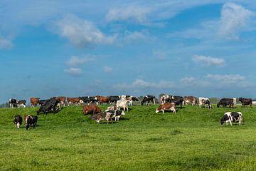 Koeien in het Friese landschap van Yvonne van Driel