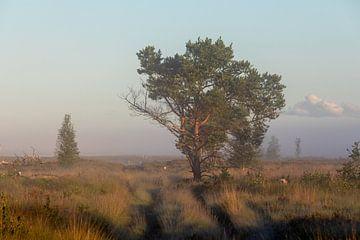 Grenspark Kalmthoutse Heide van Bruno Hermans