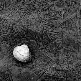 Einsame Muschel auf dem Wierumerwad mit schön geformten Mustern im Schlamm von AGAMI Photo Agency