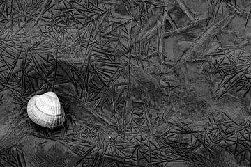 Einsame Muschel auf dem Wierumerwad mit schön geformten Mustern im Schlamm