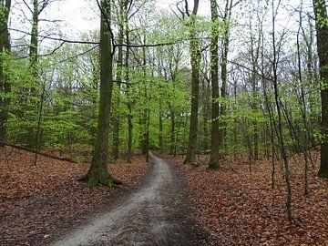 Bos in voorjaar met bospad van Tineke Laverman