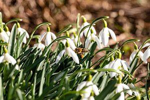 Het is winter en de bijen zijn al op zoek naar voedsel van Harald Schottner