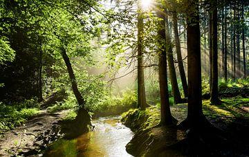 Wald mit Bach sur Günter Albers