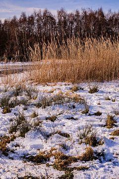 Winter & Sneeuw Oud Verlaat - Landschap nr. 3