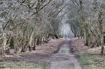 Waldweg 1 von Erik Reijnders