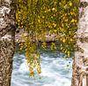 Herfst bladeren in Rondane, Noorwegen van Johan Zwarthoed thumbnail