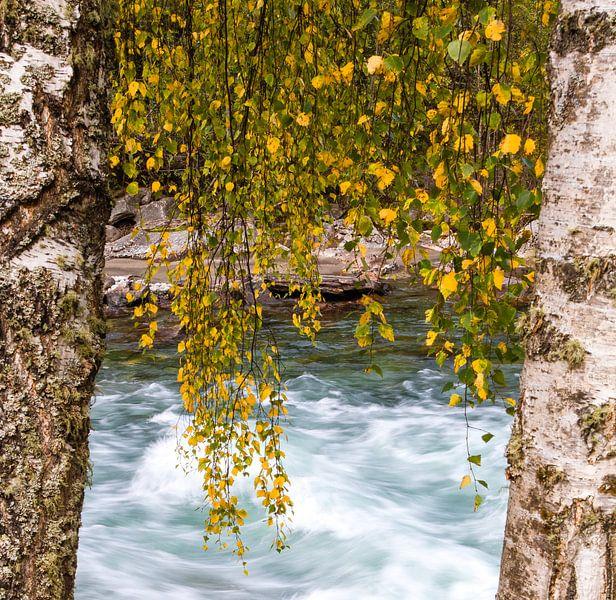 Herfst bladeren in Rondane, Noorwegen van Johan Zwarthoed