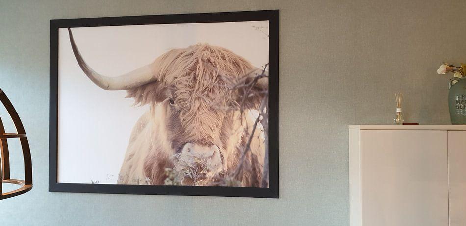 Klantfoto: Schotse Hooglander van Claire Groeneveld, op naadloos behang