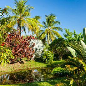 Tropische tuin van plantage Frederiksdorp, Suriname van Marcel Bakker