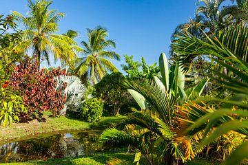 Tropischer Garten der Plantage Frederiksdorp, Surinam von Marcel Bakker