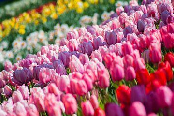 Tulpen sur Jelmer Jeuring