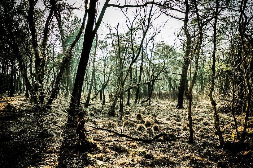 People in the Forest van Joep Oomen