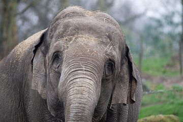 Elefant von Allround_Moments
