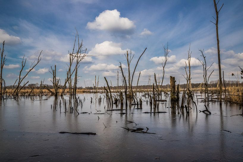 the icy lake van Koen Ceusters