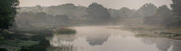 ochtenddauw panorama van Joey Hohage