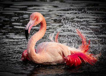 Pink van Vivian van den Ende