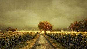 Through the Vineyard