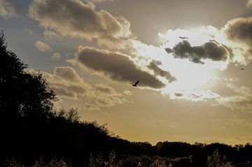 vogel in de herfst zon van Heleen de Silva