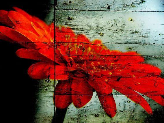 Red gerbera van brava64 - Gabi Hampe