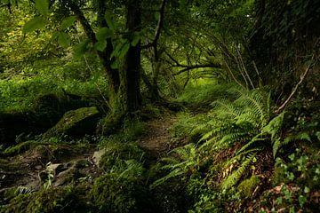 Bospad in de vallei van de Orne van Ron Poot