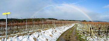 Regenboog over een wijngaard van Leopold Brix